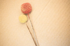 Dried billy buttons. On a paperboard background vector illustration