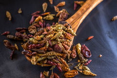 Dried Bird's Eye Chilis. Dried bird's eyes chilis- hot spice for various Indian Food Royalty Free Stock Photos