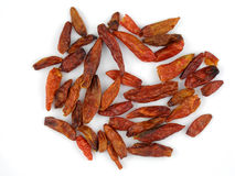 Dried birdseye chilis. Dried South African birdseye chili peppers Stock Image