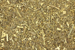 Dried Bitter wormwood background Royalty Free Stock Photo