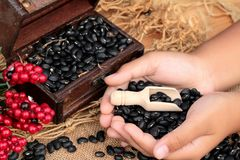 Dried black beans on wood background. Royalty Free Stock Photo
