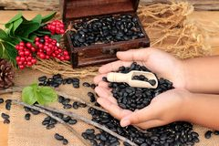 Dried black beans on wood background. Stock Images