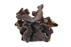 Dried black Fungus  on white background Royalty Free Stock Images