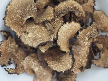 Dried black truffles. Dried black summer truffles Tuber aestivum vitt stock photo