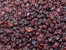 Dried blackcurrant Royalty Free Stock Photography