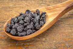 Dried blueberry. Fruit on wooden spoon against grunge wood background Royalty Free Stock Image