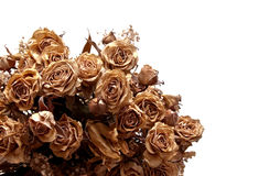 Dried bouquet #1. Dried bouquet with roses and leafs Royalty Free Stock Photo