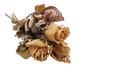 Dried Bouquet of Roses Royalty Free Stock Images