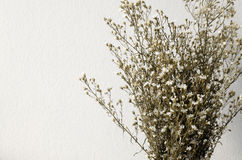 Dried bouquet of white flowers Stock Photos
