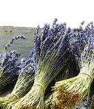 Dried Bouquets of Lavender. Dried bunches of fragrant lavender Stock Photos