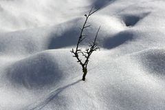 Dried branch lonely tree snow dunes desert Royalty Free Stock Photos