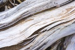 Dried branches. On the Cocoa beach martinique royalty free stock image