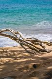 Dried branches. On the Cocoa beach martinique stock image