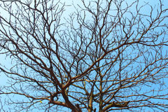 Dried branches and sky Stock Photos
