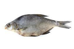 Dried bream Stock Photography