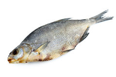 Dried bream fish Royalty Free Stock Photos