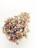 Dried bridal bouquet Stock Images