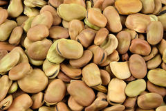 Dried broad beans. Stock Images