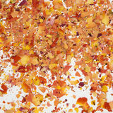 Dried broken rose petals. Close-up on white background Stock Image