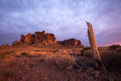 Dried broken saguaro trunk with superstition mountains in backgr Royalty Free Stock Photography