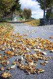 Dried brown autumn leaves at the side of a road. Dried brown autumn leaves lying scattered on the asphalt at the side of a rural road in a concept of changing Stock Images