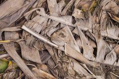 Dried brown banana leaf Stock Images