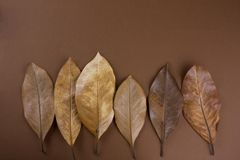 Dried brown leaves. On a brown background royalty free stock photo