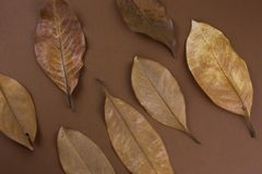 Dried brown leaves. On a brown background stock photo