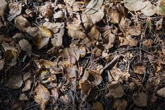 Dried brown leaves covered forest ground under sunlight in autumn.  royalty free stock photography