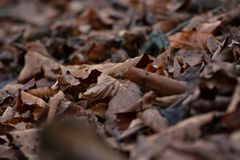 Dried brown leaves on forest floor in Autumn, shallow focus abstract. Dried brown leaves on forest floor in Autumn. Shallow focus, abstract, close up image stock photo