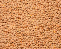 Dried brown Lentils Royalty Free Stock Photography