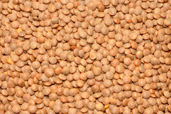 Dried brown Lentils Stock Images