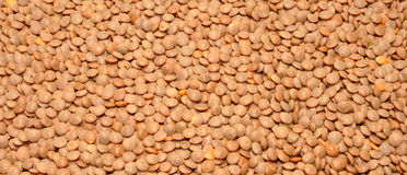 Dried brown Lentils Stock Image