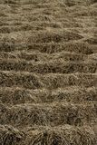 Dried brown plants in a fallow time Stock Photo
