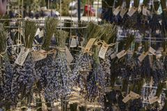 Dried brunch lavender of Lavender Festival of 123 Farm. At San Bernardino, Los Angeles County, United States Royalty Free Stock Photos
