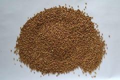 Dried buckwheat grains royalty free stock photo
