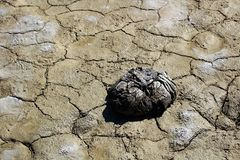 Dried buffalo feces on a dried mud flat.  Stock Photography