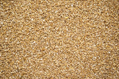 Dried Bulgur Wheat Royalty Free Stock Images