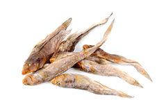 Dried bullhead (goby)  on white Stock Photos