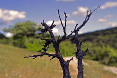 The dried bush. Against a beam, good contrast Royalty Free Stock Photography