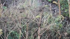 Dried bushes  closeup landscape  grass mystic. Dried bushes closeup landscape grass mystic water stock video
