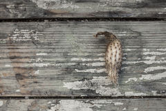 Dried cactus on the old planks Stock Image