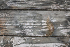 Dried cactus on the old planks Stock Images