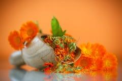 Dried calendula Royalty Free Stock Image
