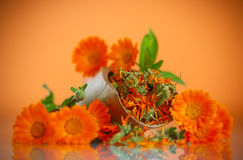 Dried calendula Royalty Free Stock Photography