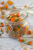 Dried calendula Stock Image