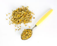 Dried camomile. On white background stock photos
