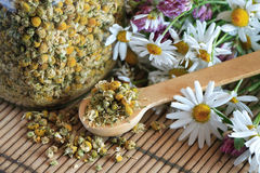 Dried Camomile Stock Image
