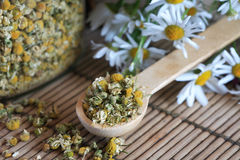 Dried Camomile Royalty Free Stock Photography