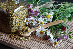 Dried Camomile Royalty Free Stock Images
